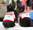 Two black, long-haired, half grown kittens wearing Christmas sweaters