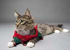 Long-haired tabby cat lying down wearing green and red Christmas Elf collar with bells